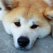 渡辺えりの愛犬の名前