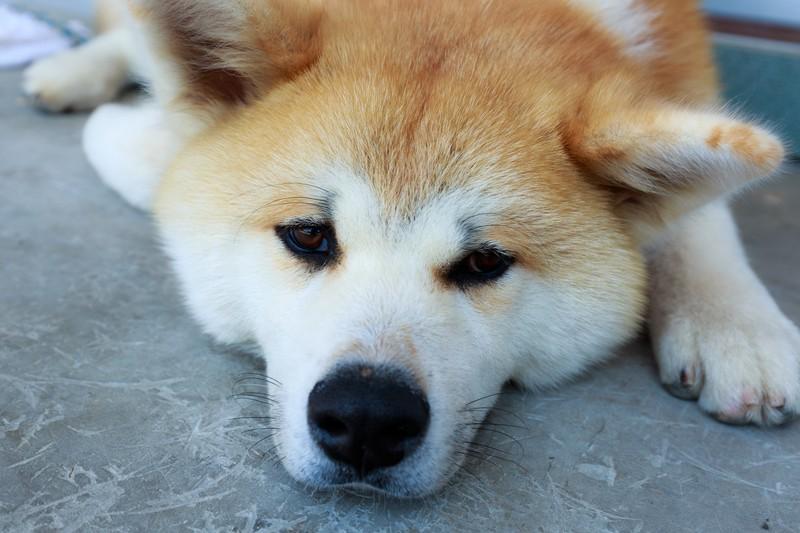 渡辺えりが飼っていた愛犬の名前は?離婚を一度留まったのは犬のお陰?